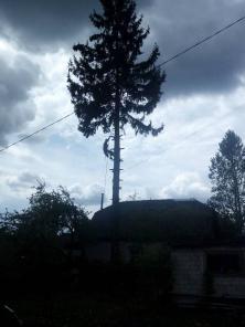 Спилить (удалить) Кронировать (обрезать) дерево методом альпинизма.