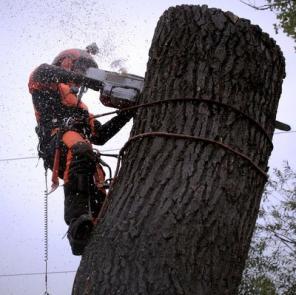 Спил деревьев любой сложности
