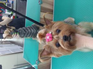 Стрижка собак и кошек в орше