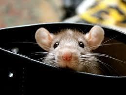Как избавиться от мышей и тараканов.
