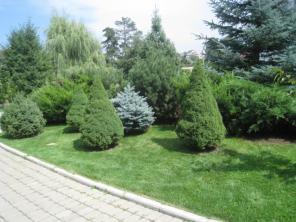 Озеленение. Ландшафтный дизайн. Газоны. Цветники