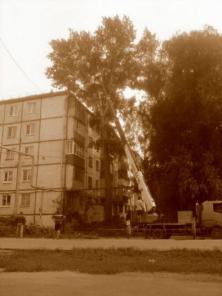 Спилить деревья, кустарник, уборка участков в Самаре
