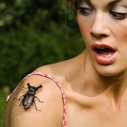 Уничтожим комаров тараканов мышей. Дератизация в Самаре с гарантией