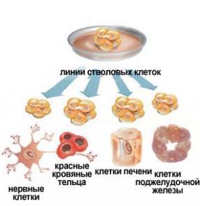 Стволовые клетки генная терапия лечение Болезни Паркинсона