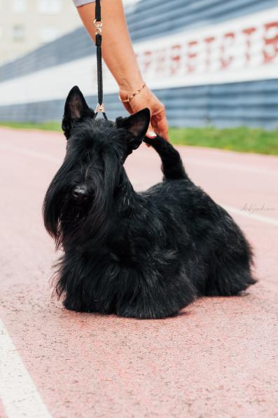 Стрижка собак в Ачинске