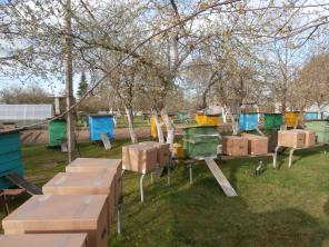 Продаём пчел карники, карпатской, среднерусской и кавказской породы