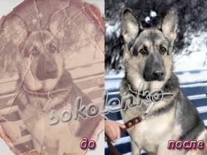 Обработка фотографий (дешево) (любой регион России)