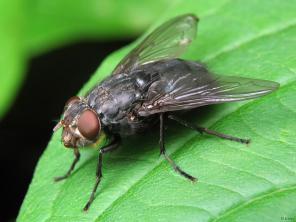 Уничтожение мух сахарниц тараканов