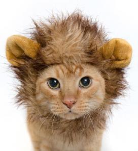 Стрижка непослушных кошек), без наркоза