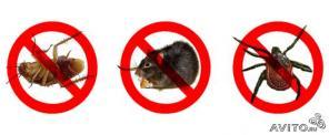 Уничтожить избавится травить клоп блох муравьи тараканы крысы мыши