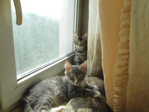 Котята красивые и пушистые в ответственные руки.