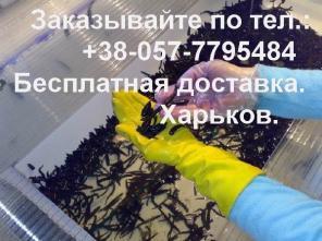 Продам пиявки медицинские (Hirudo medicinalis).