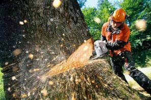 Спил деревьев и обрезка веток.