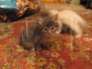 Котята в добрые и ответственные руки.