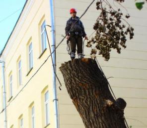 Спил деревьев в Балашихе и Балашихинском районе