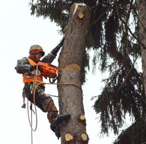 Спил деревьев в Подольске и Подольском районе