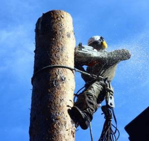 Спил деревьев в Раменском районе