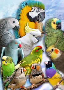 Приют для попугаев -в семье