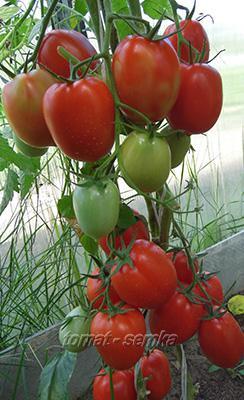 Семена эксклюзивных сортов томатов и перцев