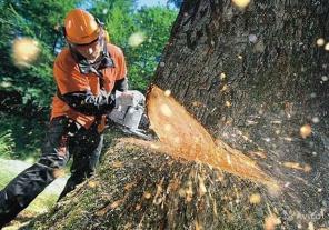 Кронирование и спиливание деревьев