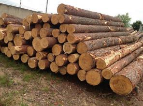 Куплю лес кругляк.