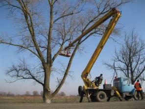 Пилим Деревья с помощью Автовышки Бронницы.