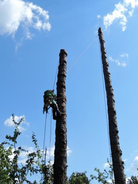 Валка, спиливание, удаление деревьев
