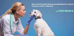 """Круглосуточная ветклиника в Санкт-Петербурге """"Ветеринарный Питер"""""""