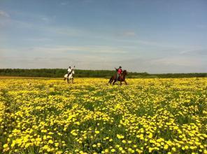 Прогулки на лошадях, обучение верховой езде.