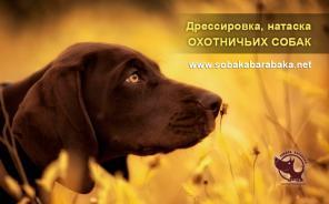 Дрессировка, натаска охотничьих собак. Киев.