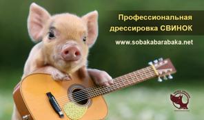 Дрессировка свиней! Киев.