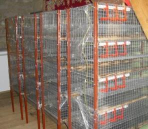 Изготовление клеток для перепелов и молодняка птицы