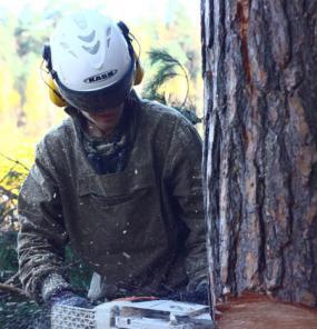 Срубить дерево в Истринском районе