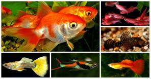 Большой выбор красивых аквариумных рыбок