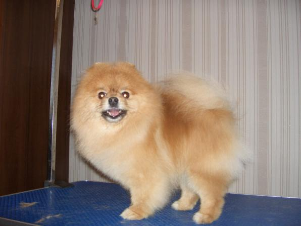 Стрижка (груминг) собак и кошек (без наркоза)