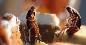 Уничтожение тараканов Симферополь, Севастополь