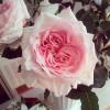 Курсы флористики, флористов Алматы