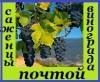 Саженцы винограда 98 сортов (десертные, винные, для беседки). 2 - х ле