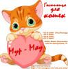 Передержка котов Минск