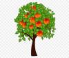 """Саженцы плодовых деревьев. Питомник """"Плодоцентр"""""""