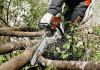 Расчистка участка от деревьев и мелколесья в Тюмени