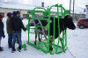 Станки для фиксации и ветеринарной обработки крупного рогатого скота