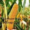 Семена французской кукурузы Элисон (ФАО 290)