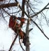 Спил деревьев в Воскресенске и Воскресенском районе