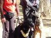 Дрессировка собак в Перми