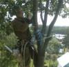 Удаление, спиливание, обрезка деревьев в Красногорском районе