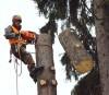 Спил деревьев в Одинцовском районе