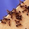 Уничтожение муравьев вытравить избавиться от муравьев в волгодонске