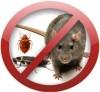 Дезинфекция уничтожение клопов, тараканов, муравьев, чешуйчатых,