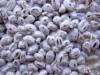 Зерновой мицелий грибов оптом и в розницу от производителя